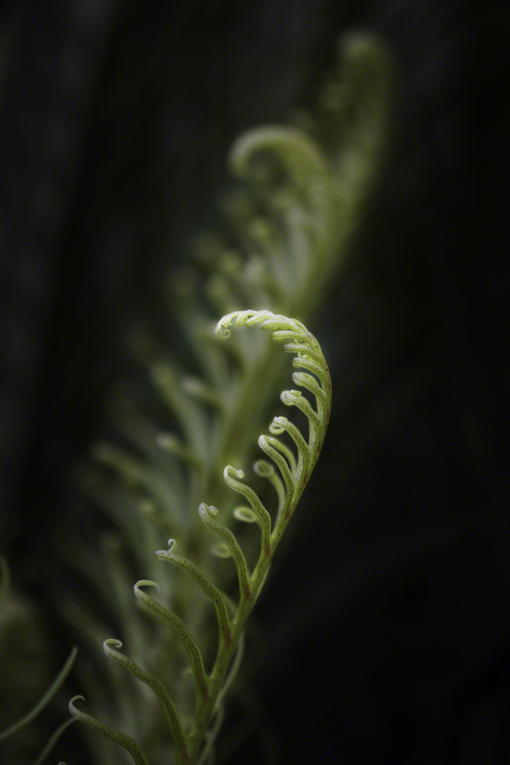 Paolo Doyle - New ferns.